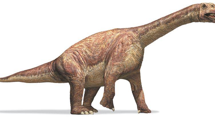 Les sauropodes, comme ce Camarasaure, produisaient selon une étudequelque 520 millions de tonnes de méthane par an. (DORLING KINDERSLEY / GETTY IMAGES)