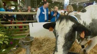 Gilles Druet a réussi à sauver la race bovine des Bleues du Nord, une fierté qu'il partage avec sa fille qui prendra la relève. (FRANCE 3)