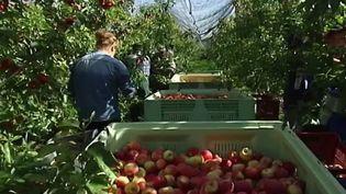 Agriculture : comment expliquer les postes vacants ? (France 2)