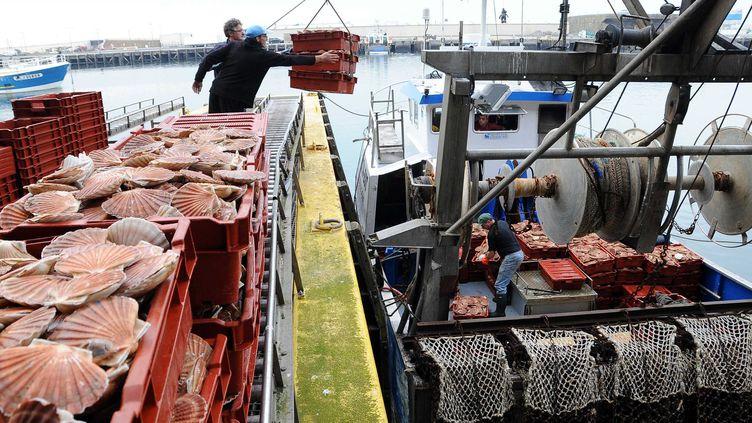 Le problème entre les pêcheurs français et britanniques vient du fait que les Français ont des restrictions en termes de calendrier, ce que n'ont pas les Britanniques. ( GUY DROLLET / MAXPPP)