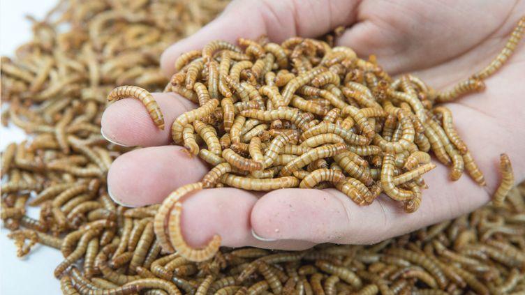 Les insectes commercialisés par Ynsect. (YNSECT / Pauline de Courrèges)