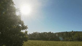 Le village de Correns, dans le var, est quasiment 100% bio. L'immense majorité de ses terres est cultivée en agriculture biologique. Tout y est fait pour protéger l'environnement. Comment fait-on pour vivre dans une commune qui a une si forte implication écologique ? (FRANCE 2)
