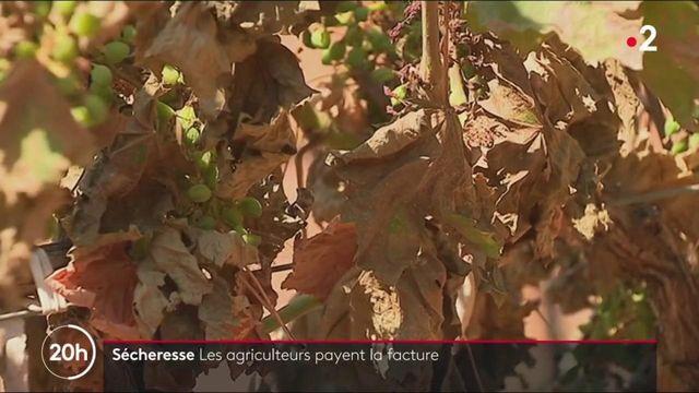 Sécheresse : les agriculteurs payent la facture