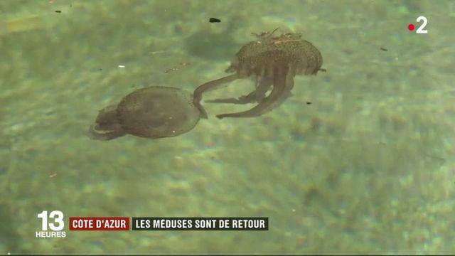 Méditerranée : les méduses envahissent les plages