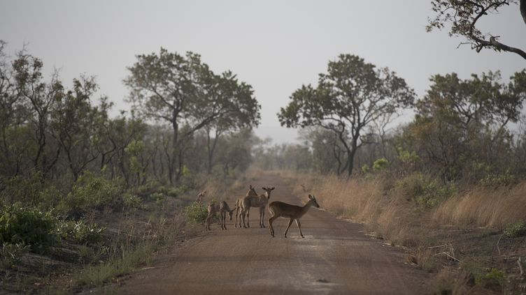 Le parc national de la Pendjari, au Bénin, où deux Français avaient été enlevés le 1er mai 2019. (STEFAN HEUNIS / AFP)