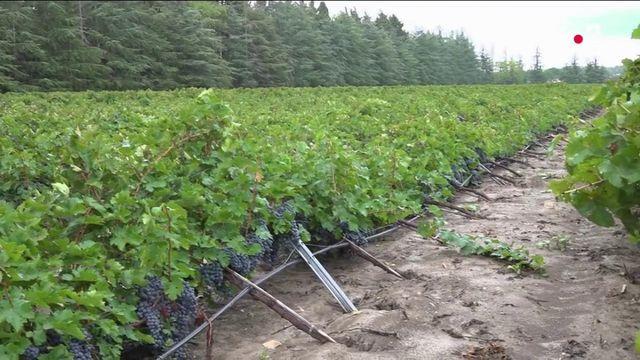 Gard : des intempéries destructrices pour les agriculteurs