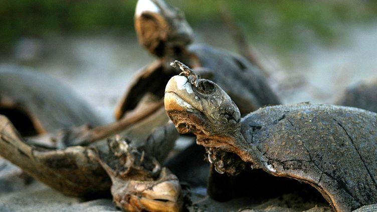Des tortues mortes sur la plage de San Valentin, le 20 janvier 2004, dans l'Etat de Guerrero (Mexique). (HENRY ROMERO / REUTERS)