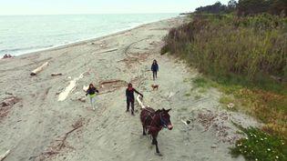 La plage d'Aléria nettoyée grâce à des mulets. (CAPTURE D'ÉCRAN FRANCE 3)