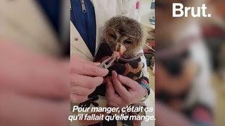 VIDEO. Dans les Cévennes, un hôpital de la faune sauvagesoigne les animaux blessés ou malades (BRUT)