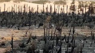 Une vue de la palmeraie de Tigui, au nord de Faya au Tchad, après l'incendie qui l'a ravagée. Une image publiée sur la page Facebook de Gour-Tigui. (Toubou Media)