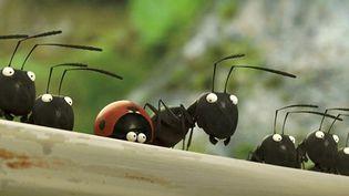 """""""Minuscule - La vallée des fourmis perdues"""" de Thomas Szabo et Hélène Giraud  (Le Pacte)"""