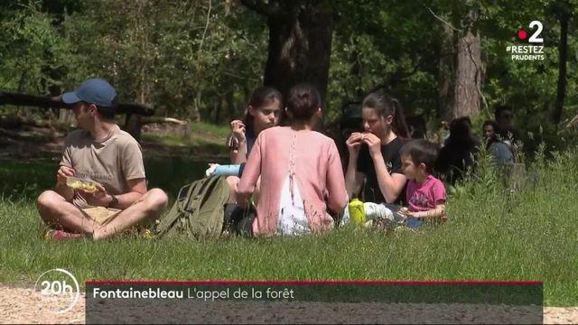 Déconfinement : la foule de retour à la forêt de Fontainebleau