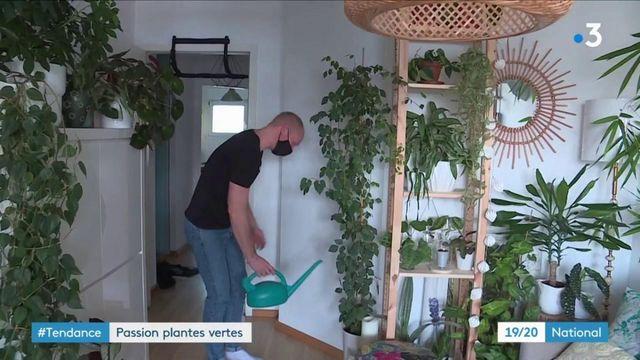 Passion : les plantes vertes sont tendances