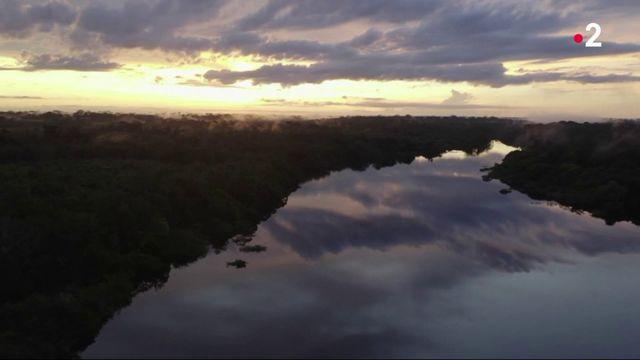 Feuilleton : grandiose Amazone (1/5)