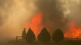 """Canada : le """"dôme de chaleur"""" provoque de violents incendies à Lytton (France 2)"""
