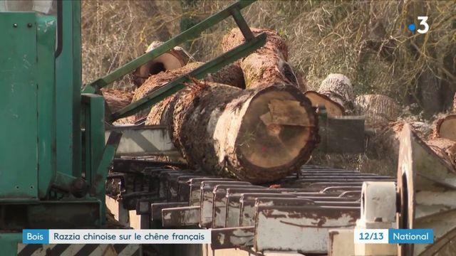 Bois : razzia chinoise sur le chêne français