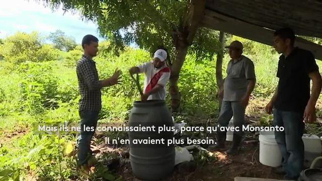 Agriculture biologique : le Salvador entame sa transition