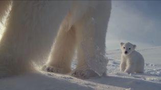 Une ourse polaire et son petit, filmés par inadvertance par une caméra cachéesur la banquise, des images publiées le 20 juillet 2015 sur YouTube. (JOHNDOWNERPROD / YOUTUBE)
