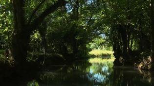 Depuis samedi 30 mai, les embarcadères du marais poitevin, dans les Deux-Sèvres, accueillent à nouveau des promeneurs. (France 3)