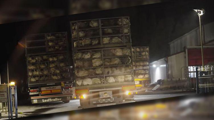 Capture écran de la vidéo de l'association L214. (CAPTURE ECRAN YOUTUBE)
