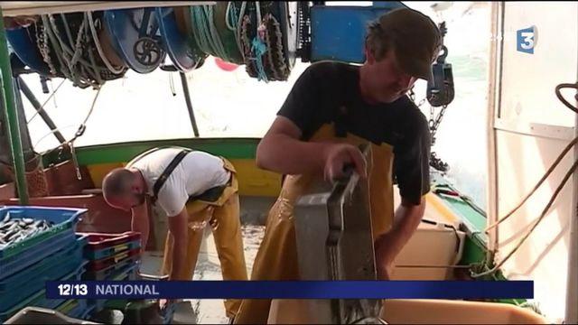 Vendée : la sardine pour emblème