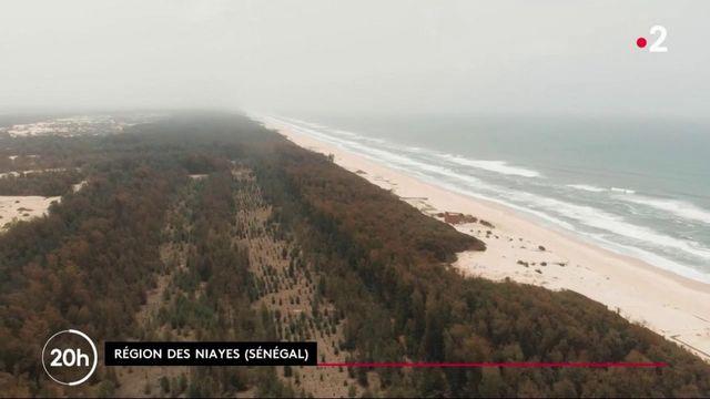 Ils sauvent la planète : les arbres sur Sénégal contre l'avancée de la mer