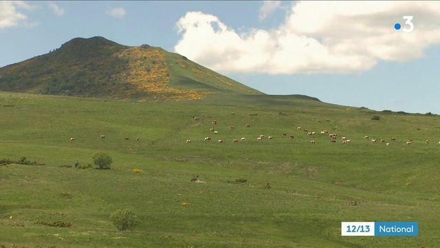 Massif du Sancy : les secrets du Saint-Nectaire, trésor d'Auvergne