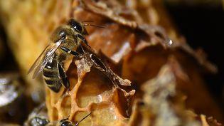 Un abeille, à Pont-de-Monvert, en Lozère, le 25 juin 2018. (SYLVAIN THOMAS / AFP)