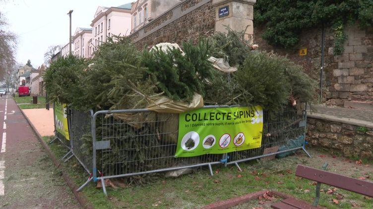 Point de collecte des sapins de Noël dans les Yvelines (France 3 Paris Ile de France)