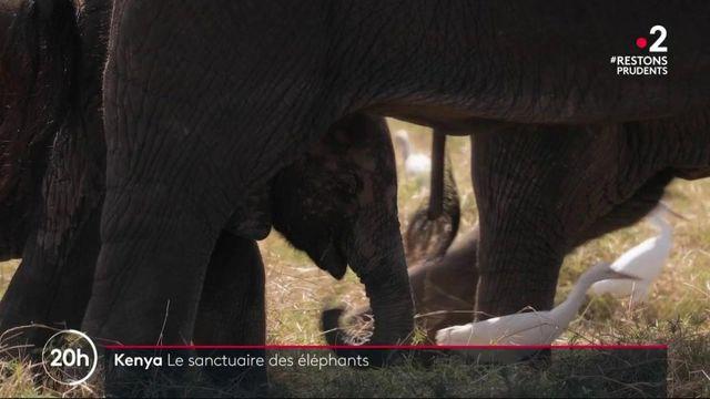 Au Kenya, le paradis des éléphants