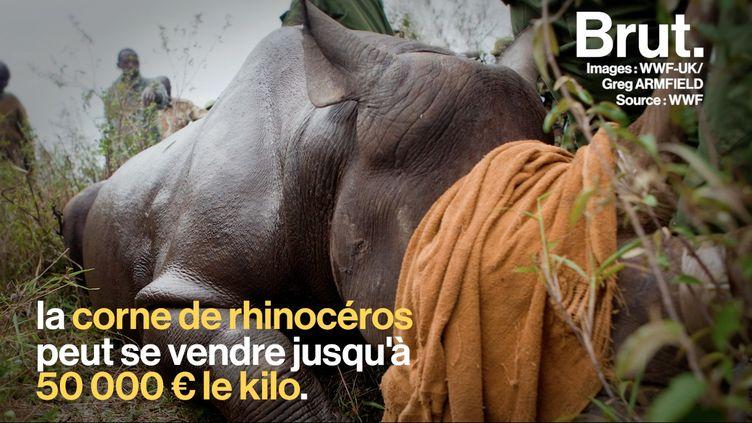 VIDEO. En Chine, le commerce d'os de tigres et de cornes de rhinocéros est de nouveau légal (BRUT)