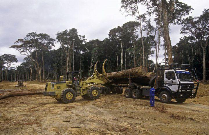 Exploitation de la forêt au Gabon (23 avril 2007) (AFP - Biosphoto / Michel Gunther)
