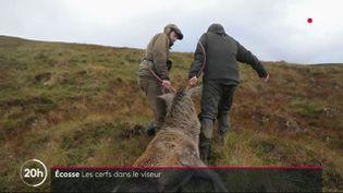 A la chasse aux cerfs en Ecosse. (FRANCE 2)
