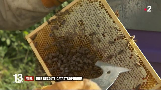 Sécheresse, canicule, gel... la production de miel perturbée par les intempéries