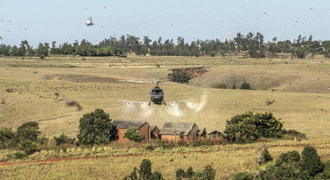 (Invasion de criquets à Madagascar. © Aurore de la Brosse)