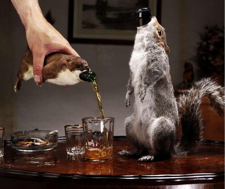 La brasserie écossaise Brewdog a sorti en 2010 une bière contenant 55% d'alcool, dont la bouteille est vendue dans un écureuil empaillé. (REX FEATURES / REX / SIPA)