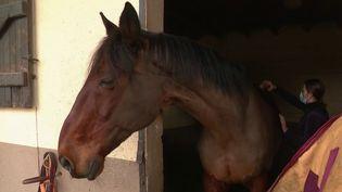 Sport : le boom de l'équitation (France 2)