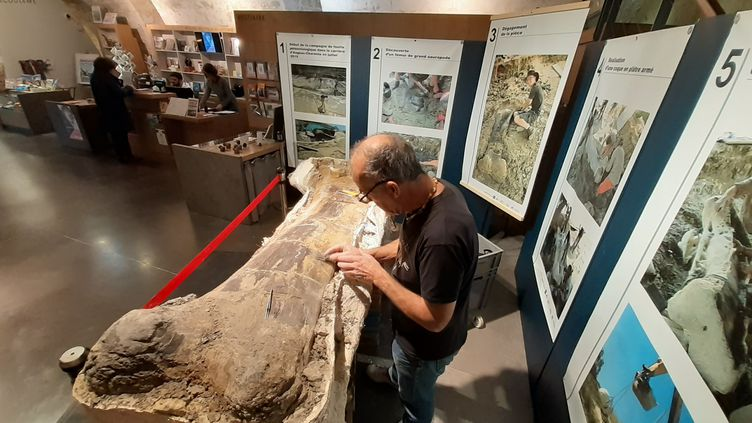 Le fémur de tyriasaure découvert cet été en cours de nettoyage, en public, au Musée d'Angoulême. (Musée d'Angoulême)
