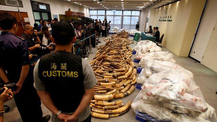 Des douaniers chinois montrent à la presse plusieurs tonnes d'ivoire saisies à Hong Kong le 6 juillet 2017. (Photo Reuters/Bobby Yip)