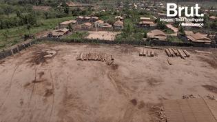 L'exploitation illégale de bois précieux menace la forêt amazonienne (BRUT)