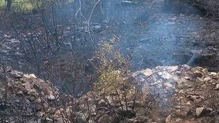 Aude : l'incendie du massif de la Clape maîtrisé, le feu reste sous très haute surveillance (France 3)