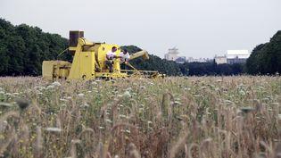 Des agriculteurs céréaliers, au Bois de Vincennes le 20 juillet. (JACQUES DEMARTHON / AFP)