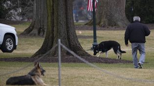 Champ(à gauche) et Major, les deux chiens de Joe Biden dans un jardin de la Maison Blanche à Washington (USA), le 25 janvier 2021. (JIM WATSON / AFP)