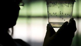 Une chercheuse observedes moustiques susceptibles de véhiculer le virus Zika, le 8 janvier 2016 à Sao Paulo (Brésil). (NELSON ALMEIDA / AFP)