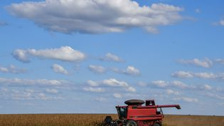 """Les agriculteurs brésiliens s'inquiètent notamment du """"principe de précaution"""" intégré dans l'accord à la demande de l'Union européenne. (NELSON ALMEIDA / AFP)"""