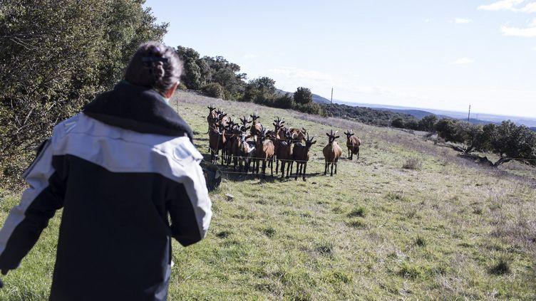 Une productrice de fromage de chèvre dans le département de l'Hérault, en février 2018. (YANN CASTANIER / HANS LUCAS / AFP)