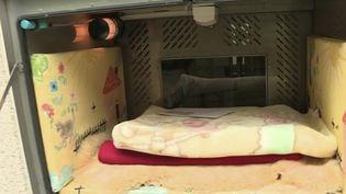 """Allemagne : des """"boîtes à bébé"""" permettent aux mères en détresse d'abandonner leur enfant anonymement. (FRANCE 2)"""
