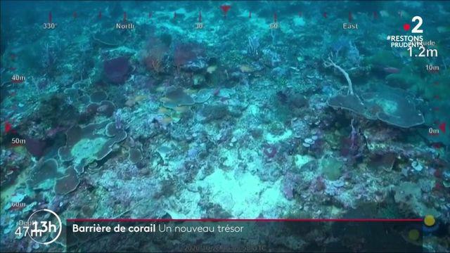 Grande barrière de corail : un nouveau récif découvert