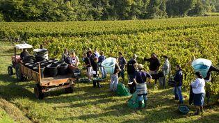 Des vendangeurs travaillent dans des vignes en Gironde. (PHILIPPE ROY / PHILIPPE ROY)
