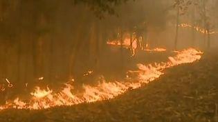 Capture d'écran montrant les flammes àAlbergaria-a-Velha, dans le centre du Portugal, le 2 avril 2015. (RTP / EVN)